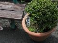 Dans les pots au jardin des plantes
