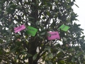 Même les arbres fraudent